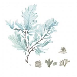Algen-blau-Rohstoffe-Galerie